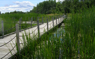 Horicon Marsh Boardwalk in Dodge County