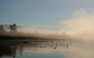 Morning Mist in Oneida County