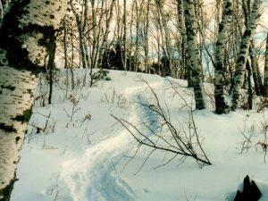 Boulder Junction Trail