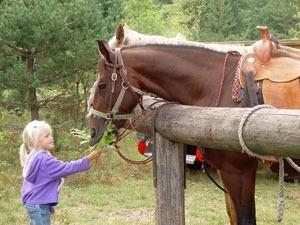Horses in Wisconsin