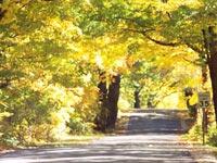 Vilas Hwy 60 Rustic Road