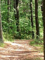 Wooded Trail in Vilas County