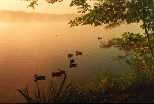 ducks in fall