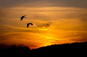 MID nature pheasant branch conservancy sandhill cranes sunset