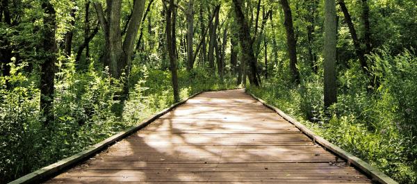 Wisconsin Trail