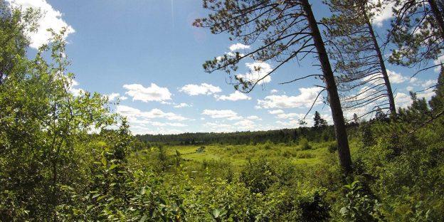 Van Vliet hemlocks Vilas County Wisconsin